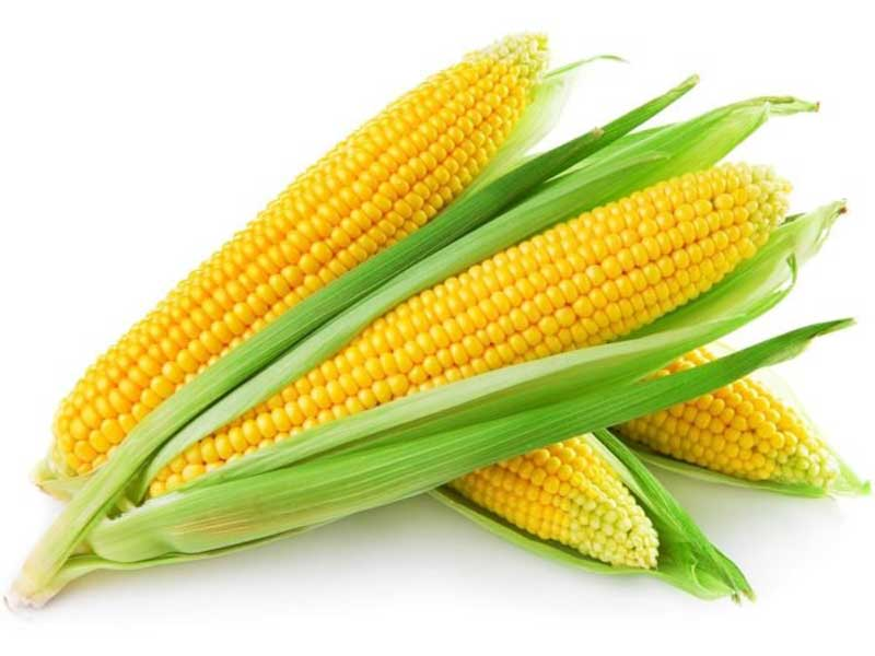 خواص ذرت corn-maize-benefits