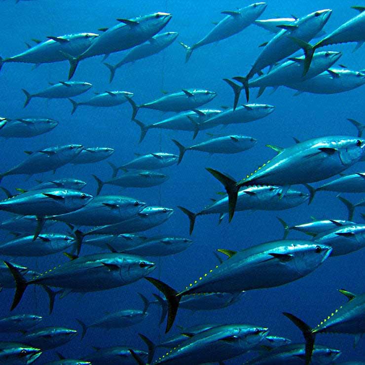 غذاهای مضر برای سلامت مغز,ماهیهای سرشار از جیوه